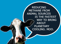 Reducing Methane from animal sources is the fastest way to bring about planetary cooling